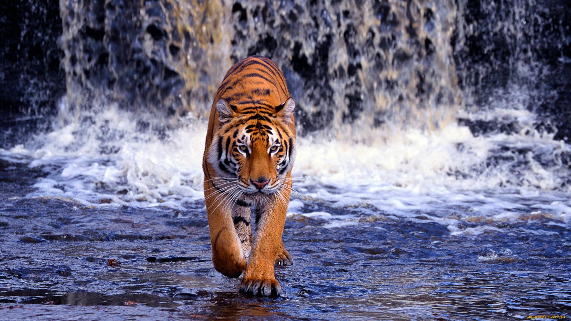 Красивые движущиеся картинки животных